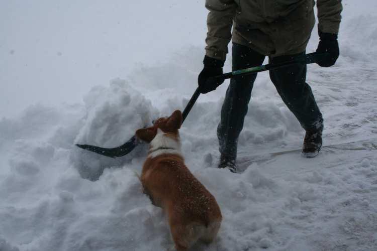 Darwin in the snow-09