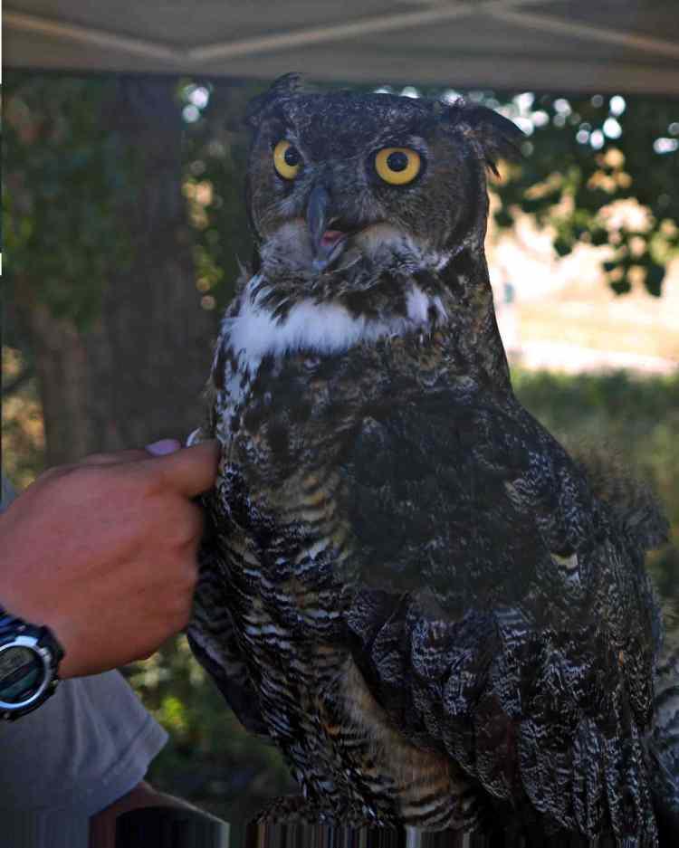 Owl feather depth_edited-2