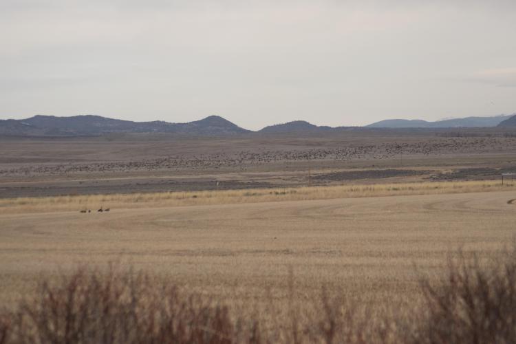Huge flock to west-2