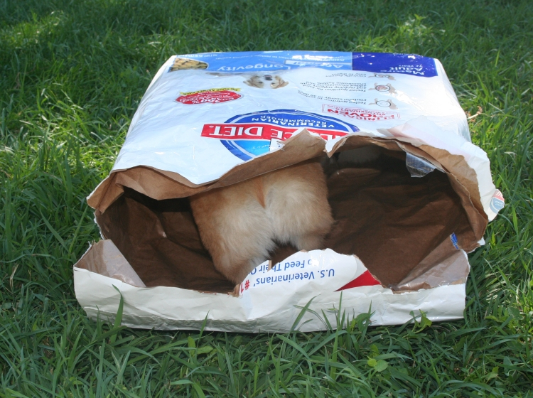 Darwin in dog food bag-6_edited-1