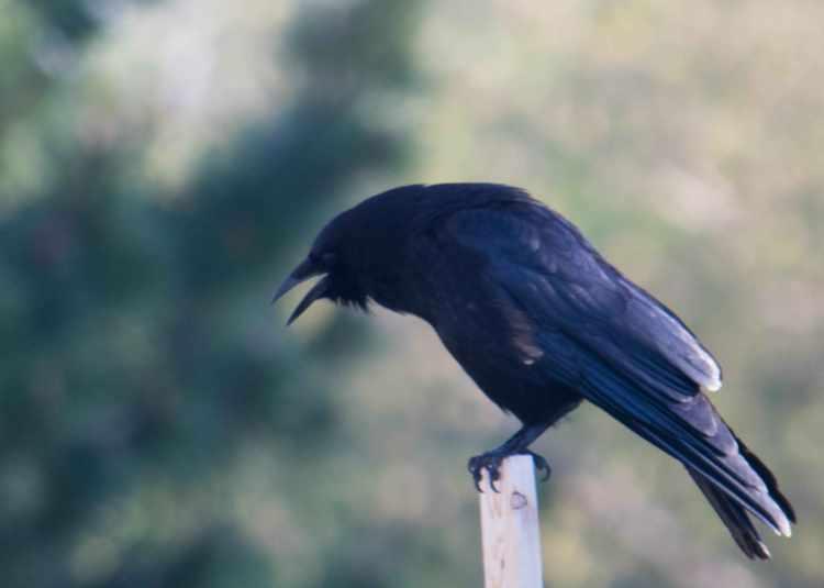 Raven-3_edited-1