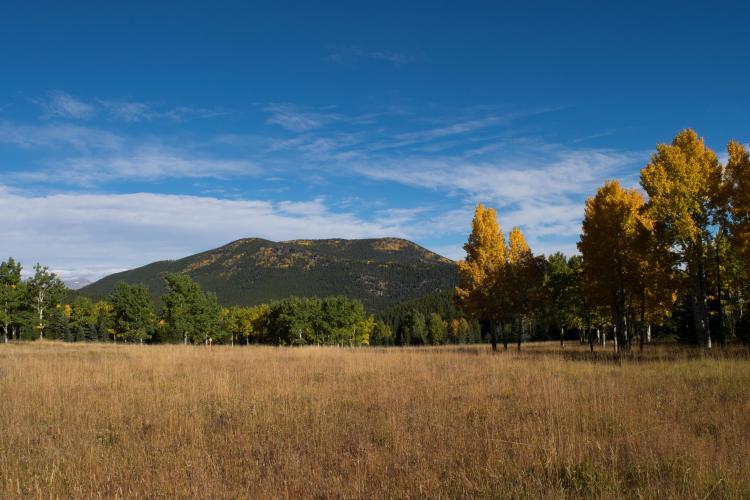 aspen-meadow-4